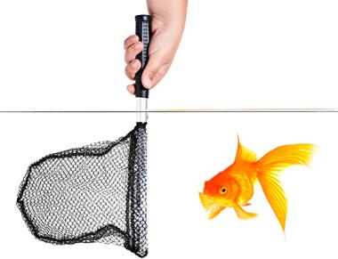 Fish Net 380 istock